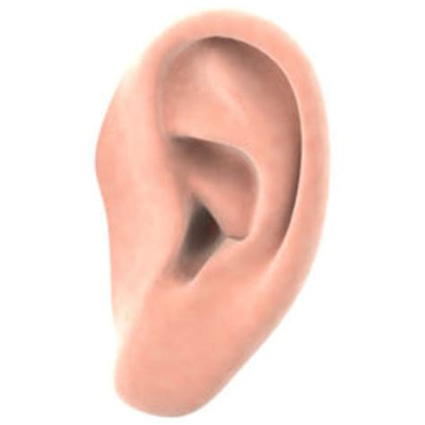 New research on restoring hearing loss